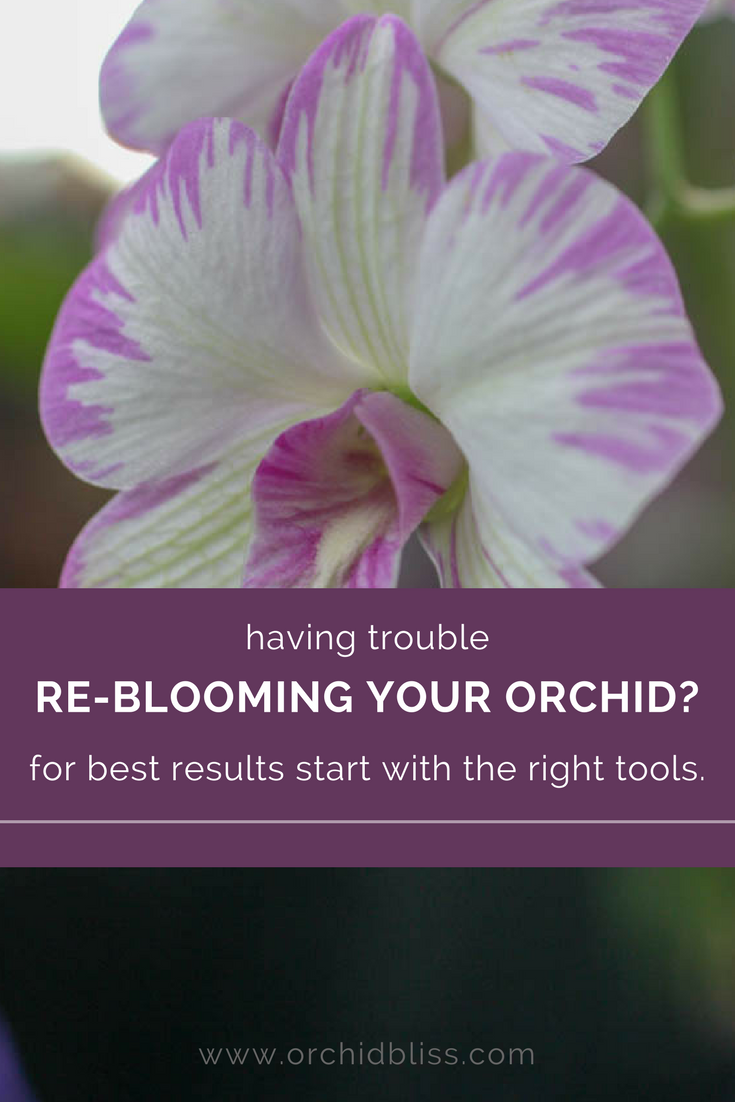 Find out which tools will help you to bloom your orchids