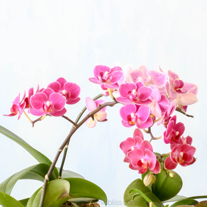 back to school - moth orchids