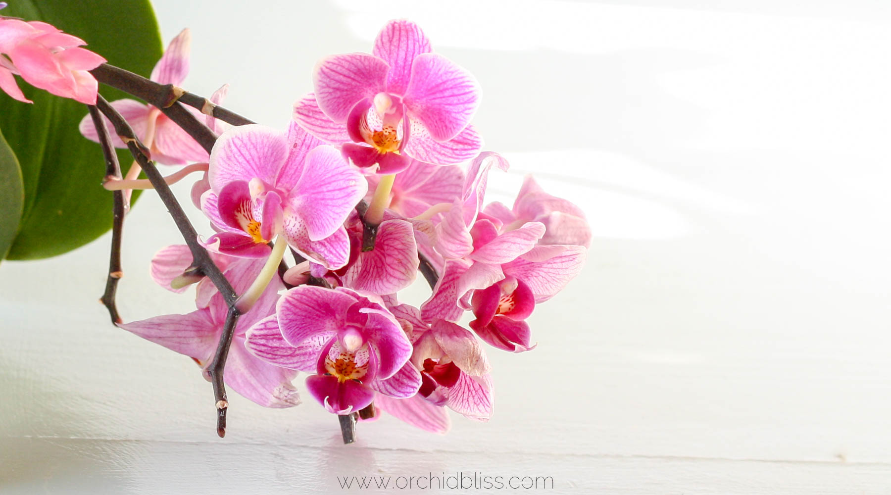 back to school - orchids