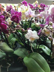 Floralistic 2 inch pot