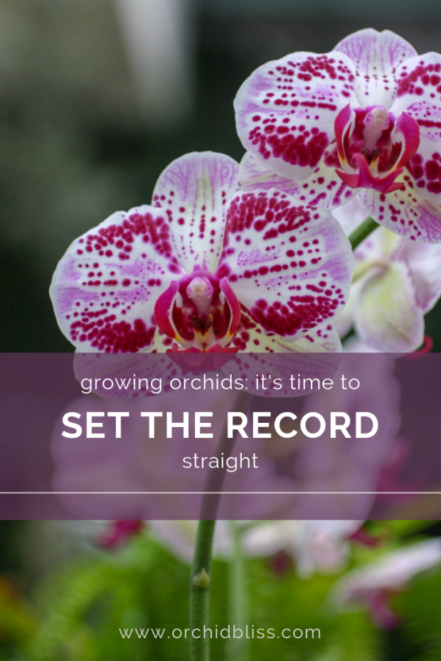 lies about growing orchids