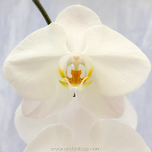 tips for newbies - orchids