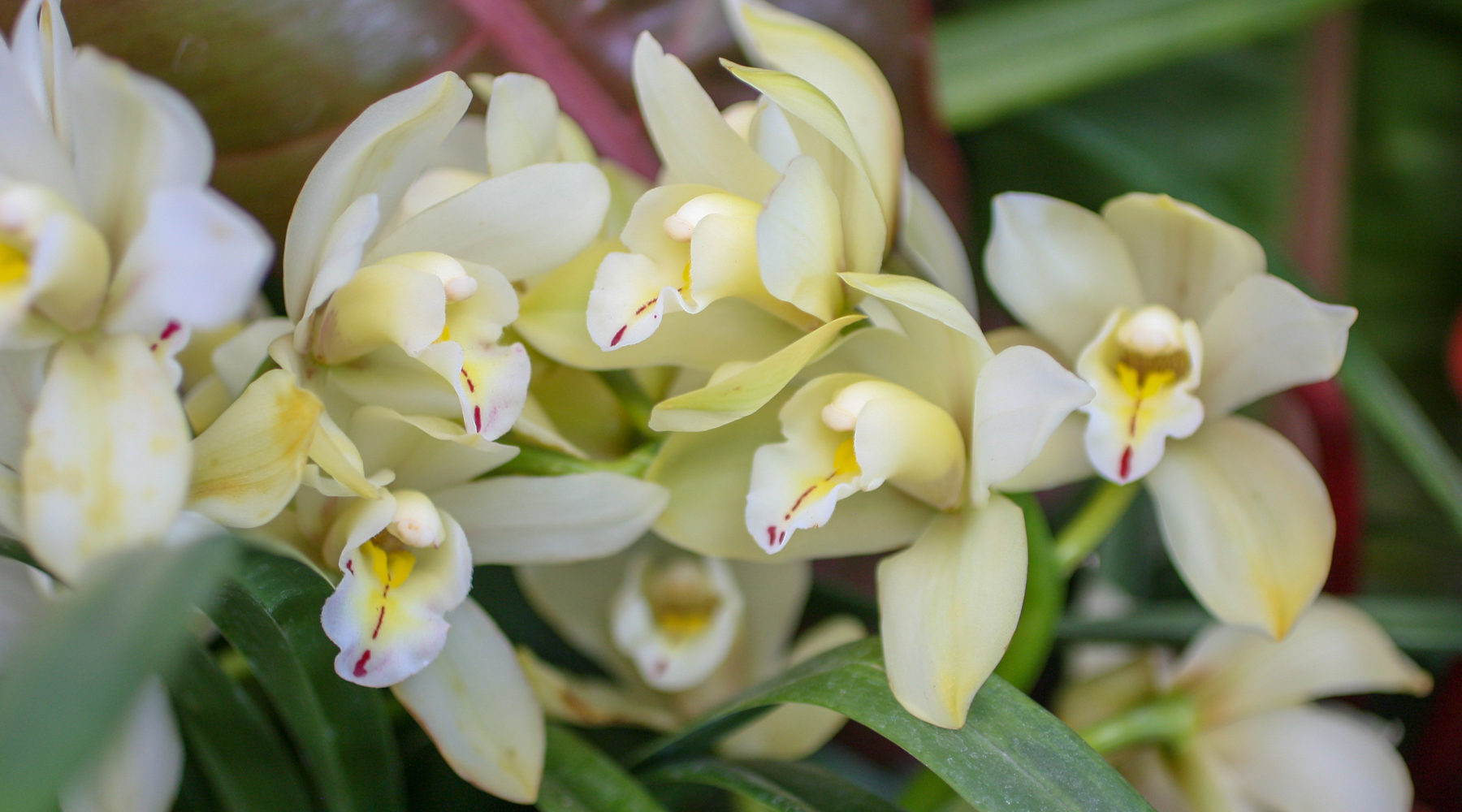 spring orchid care