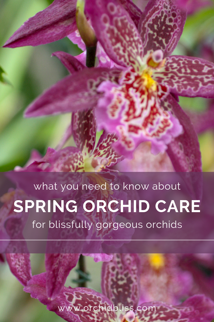 spring orchid culture