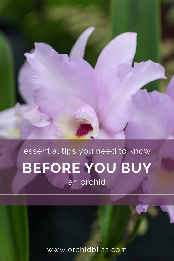 What you need to know before buying an orchid