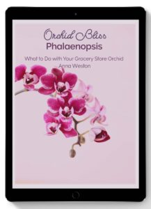 What to Do with Your Grocery Store Orchid Ebook