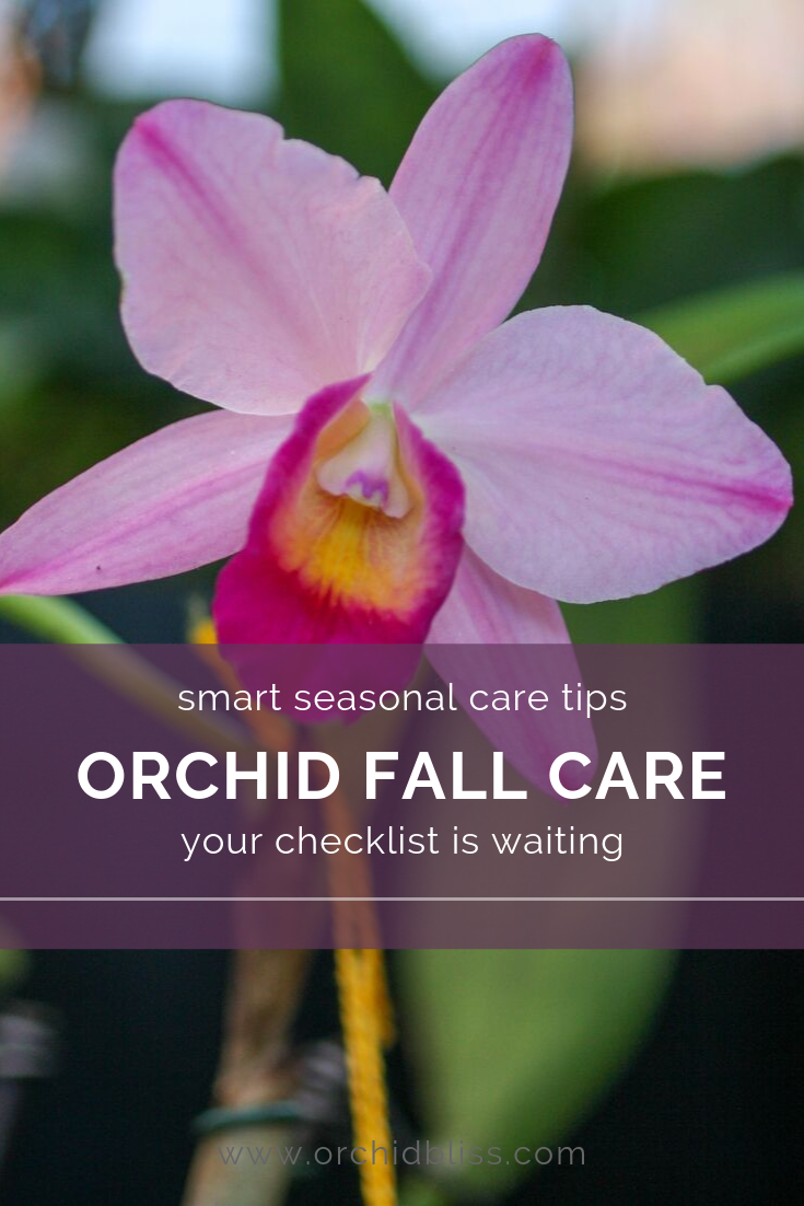 seasonal orchid care - discover fall care for orchids