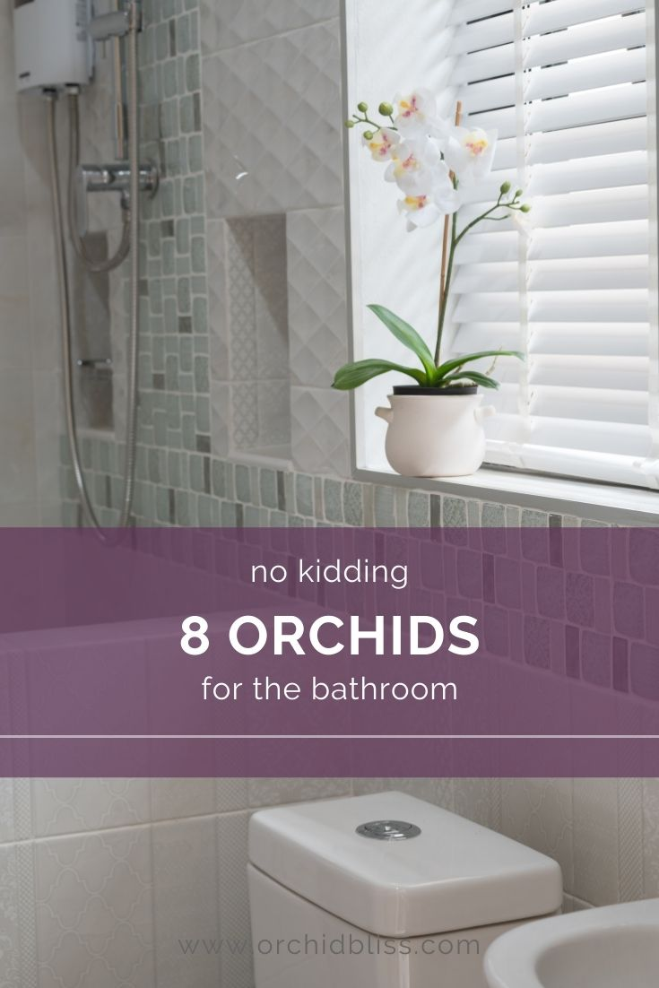 best orchids for the bathroom