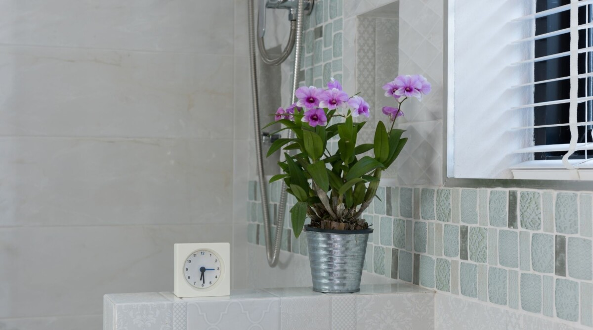 dendrobium in the bathroom