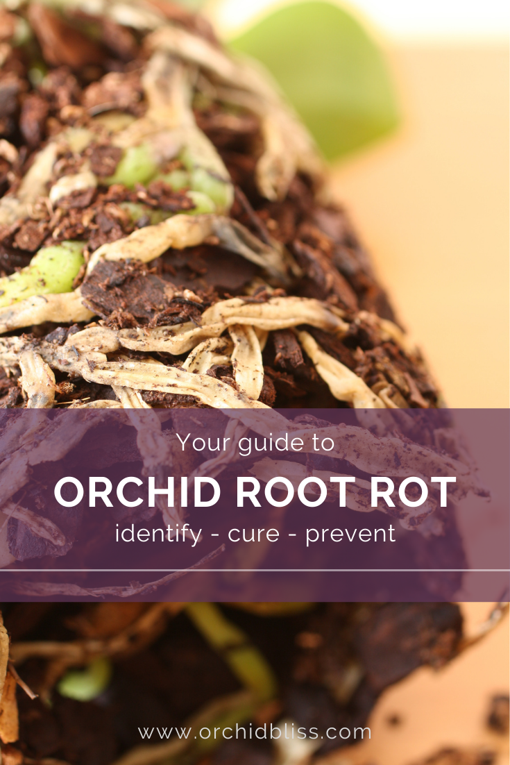 fixing orchid root rot