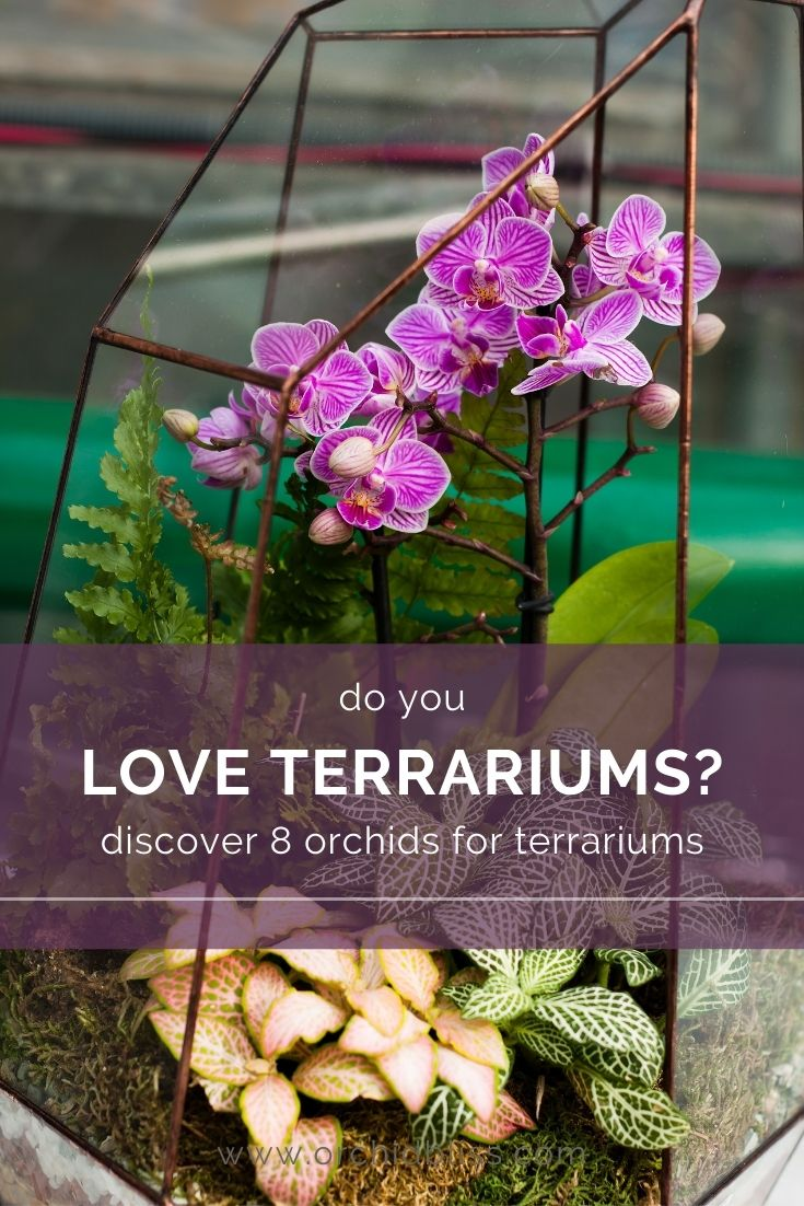 check out the these 8 orchids suited for terrariums