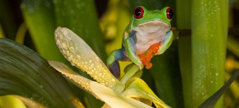 frog with orchid