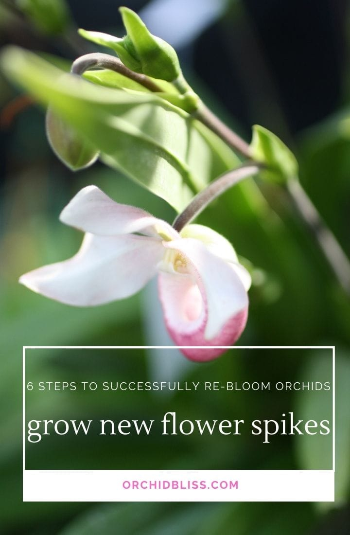 orchids - grow flower stems