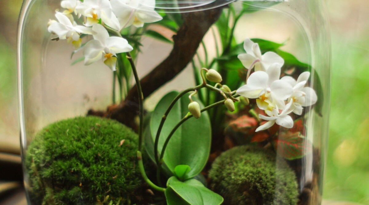 very best orchids for terrariums
