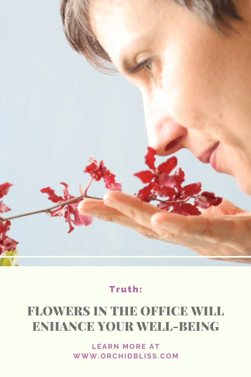 feel better - grow orchids in your office