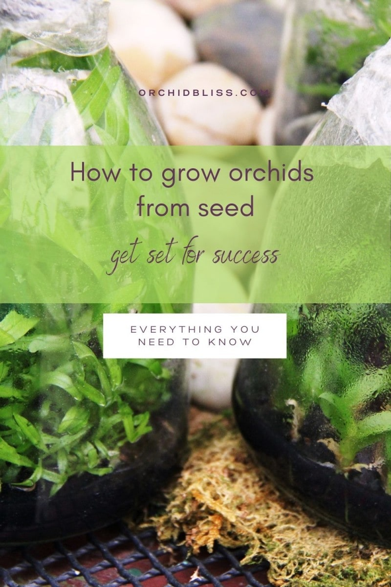 deflasking orchids - orchid seeds