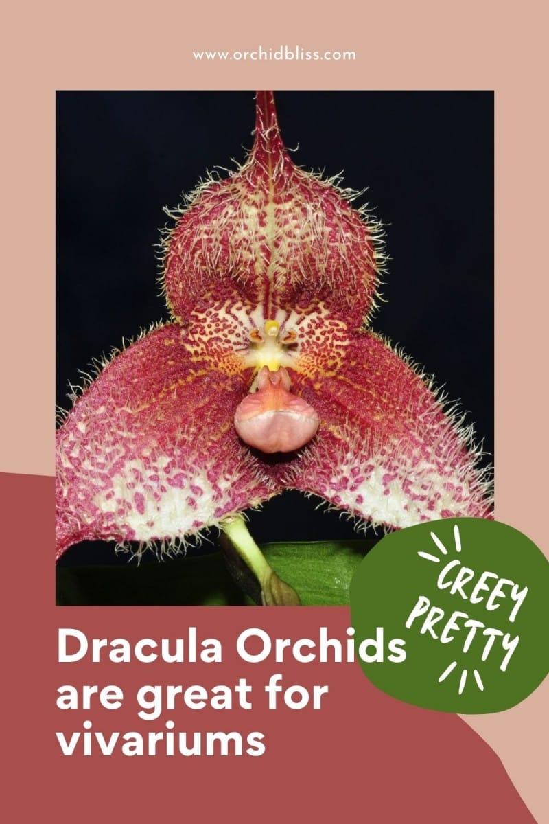 dracula orchids - grow well in vivariums