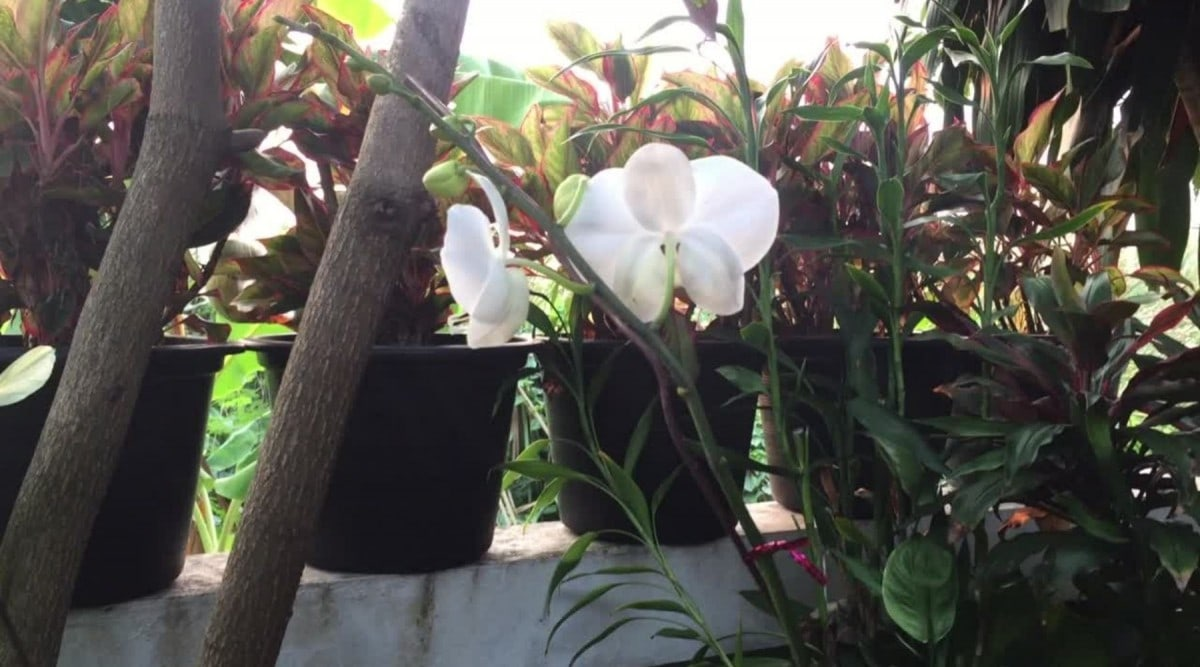 orchids - direct sunlight