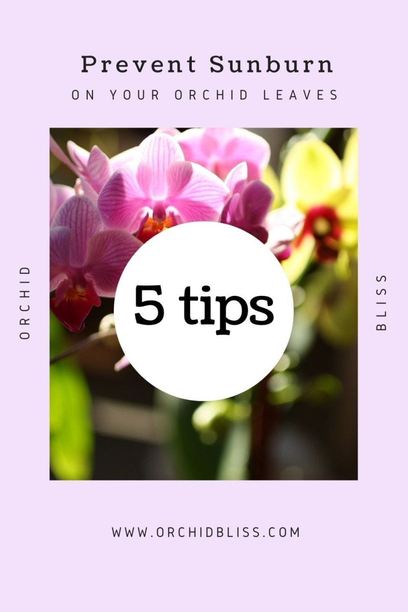prevent sunburn - orchid leaves
