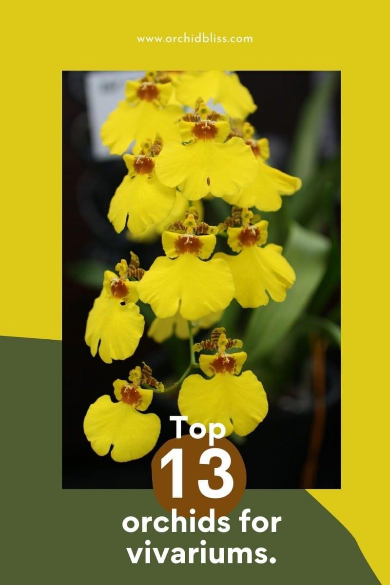 top orchids for vivariums