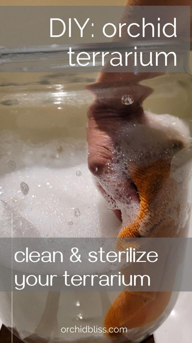 clean - sterilize - orchid terrarium (2)
