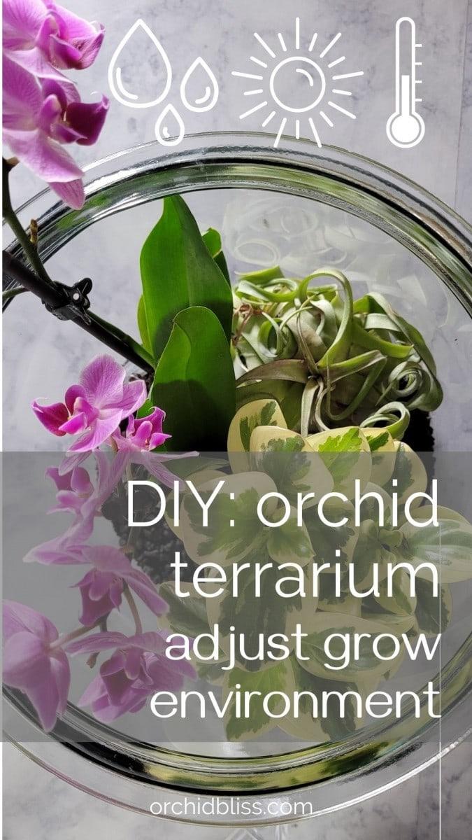 control airflow - humidity - orchid terrarium