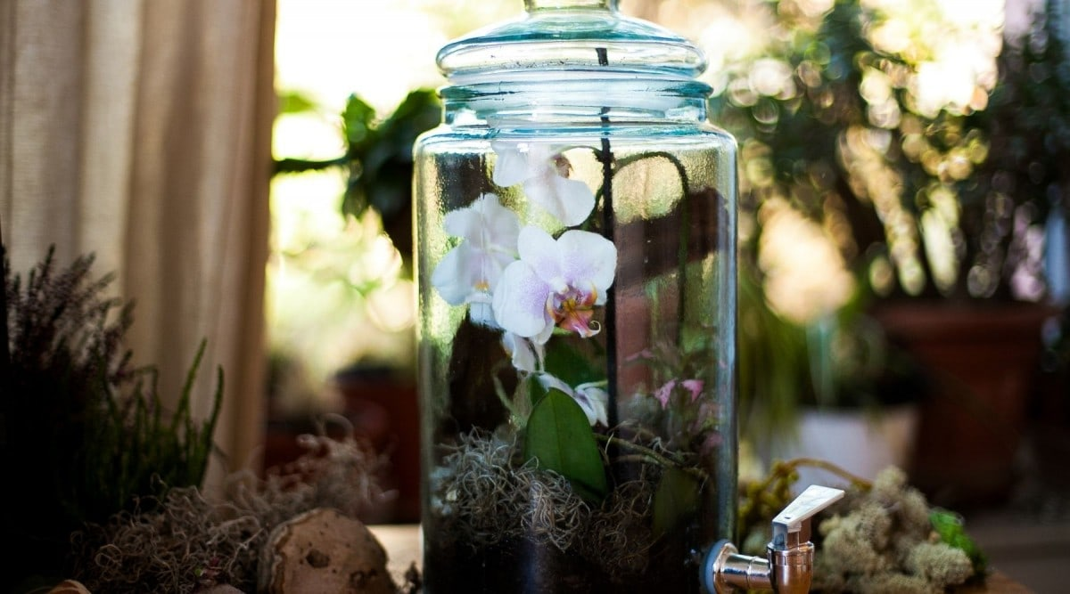create your own orchid terrarium