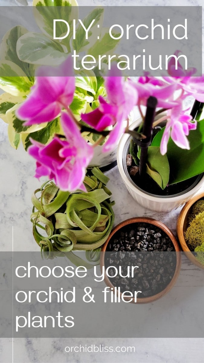 how to choose plants for your orchid terrarium
