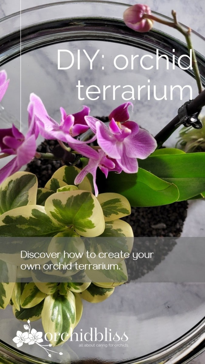 how to create your own orchid terrarium